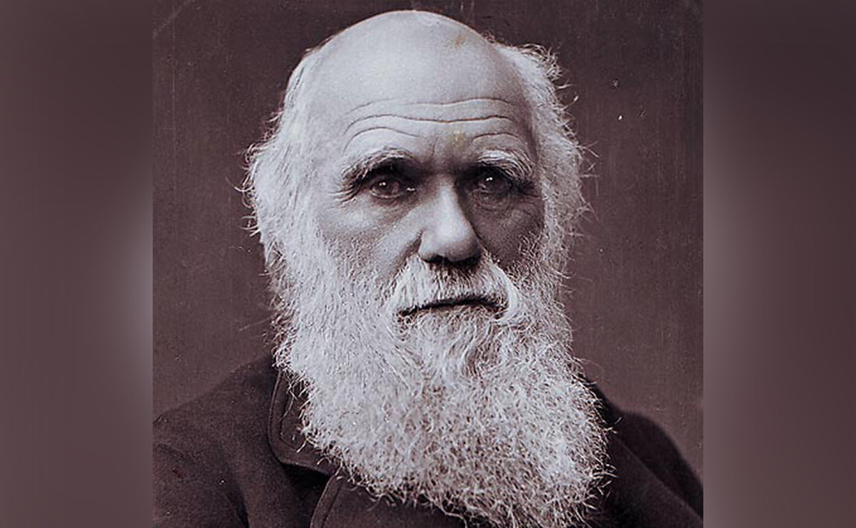 a short story on charles darwin At first glance, charles darwin seems an unlikely revolutionary  all existing  creatures, he argued, descended from a small number of original.