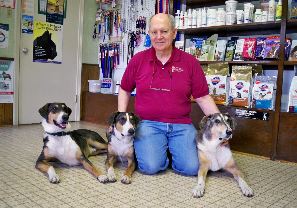 Phillip Dupont says losing his original dog Melvin (far right) was very hard, but Ken (far left) and Henry — two clones made from Melvin's skin cells — have helped a lot with the grief. The dogs' slightly different markings reflect differing environme