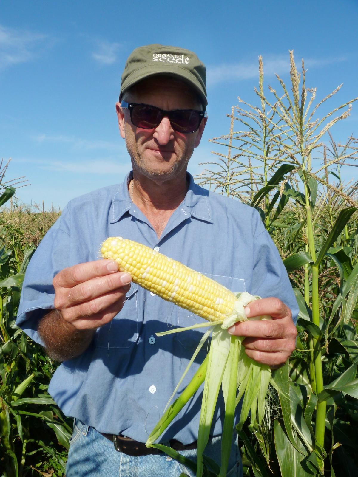 """Bill Tracy, who breeds organic versions of sweet corn in Wisconsin, recently released one called """"Who Gets Kissed."""""""