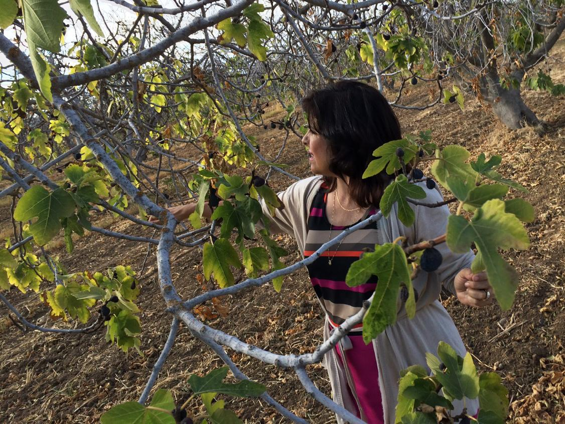 Tonetta Simone Gladwin has let her fig trees go because she doesn't have enough surface water for them, nor enough money to dig a new well.