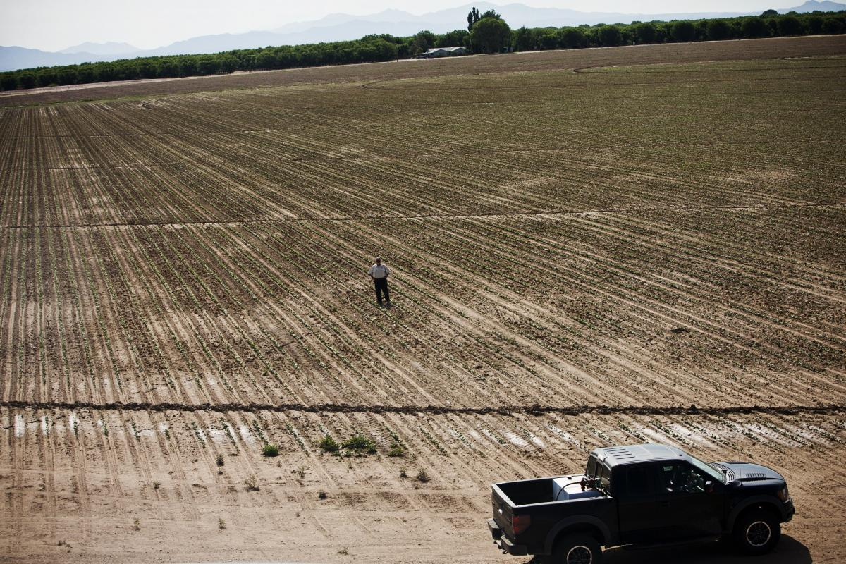 Buffett in a pinto bean field on the Arizona farm, where he grew 60,000 pounds of beans for a Tucson food bank in 2012. Another goal of Buffett's research farm is to find better crops for poor subsistence farmers.