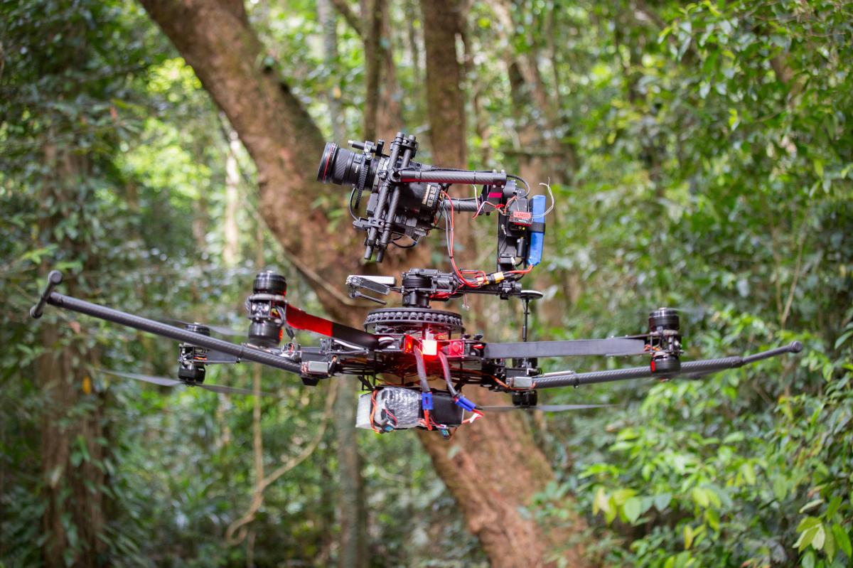 A camera drone provides a birds-eye view of the jungle.