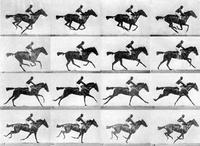 In 1878, landscape photographer Eadweard Muybridge set up a series of still cameras side by side at a racetrack, rigging them to be triggered by threads stretched across the course as the horse passed. Considered an intermediate stage in cinematography, M