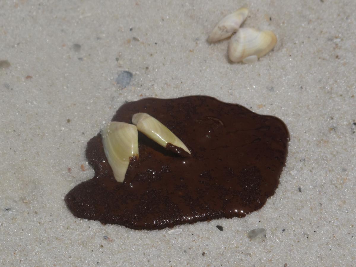 Fresh oil puddles on the white sand in Orange Beach, Ala., during the BP oil spill in 2010.