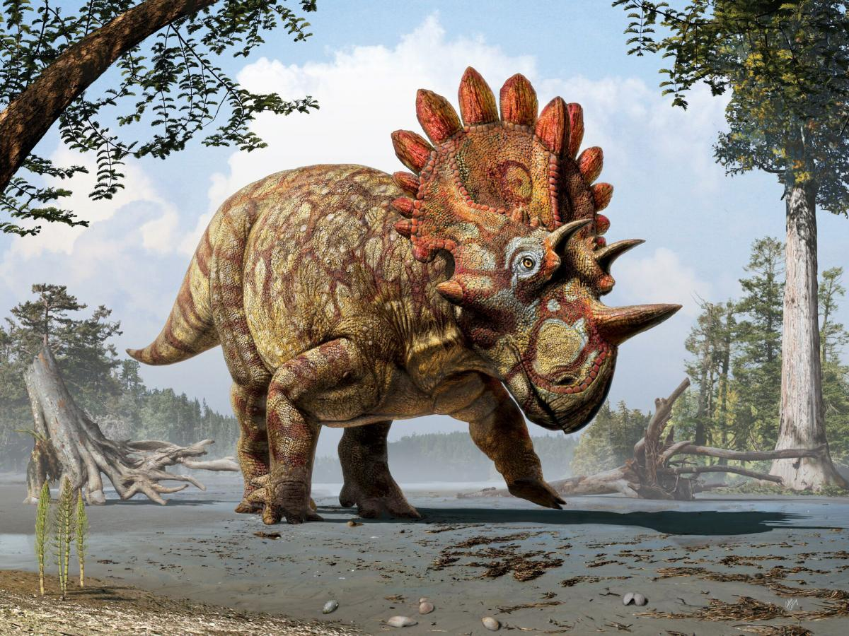 Artistic life reconstruction of the new horned dinosaur Regaliceratops peterhewsi in the palaeoenvironment of the Late Cretaceous ofAlberta, Canada.