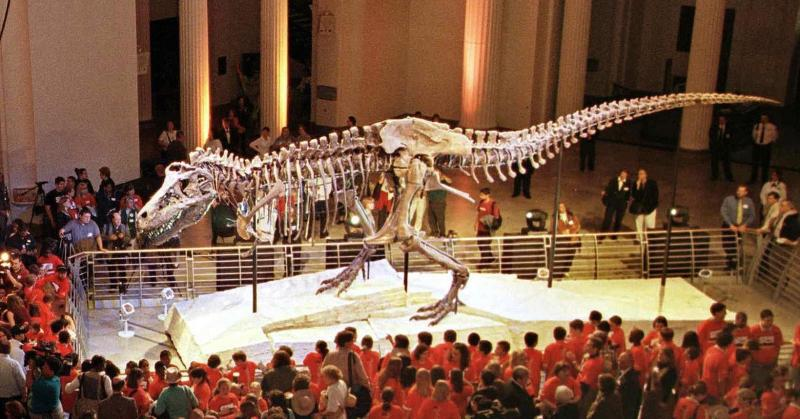 """Sue,"" the Tyranosaurus rex skeleton, is one of the most famous exhibits at Chicago's Field Museum of Natural History"