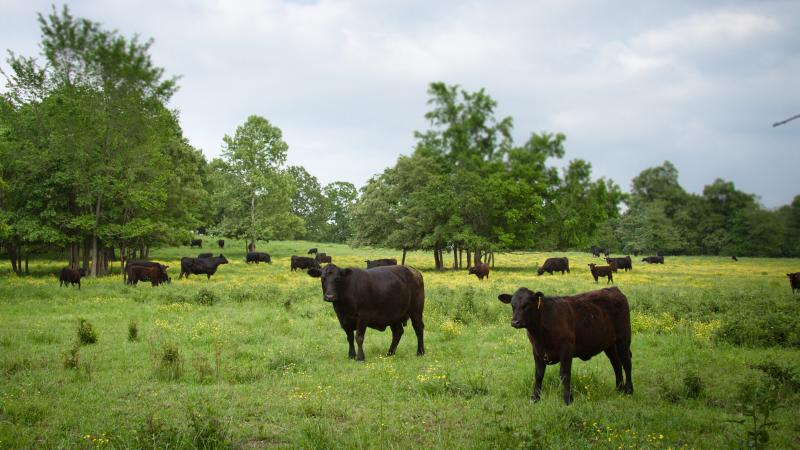 Patricia Whisnant, who runs Rain Crow Ranch in Doniphan, Mo., says her grass-fed beef can compete with the Australian product because it has a better story American consumers can connect with.