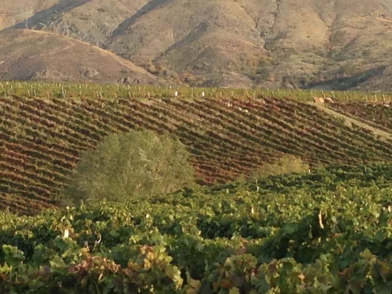 """One chapter in Cathy Huyghe's Hungry for Wine is devoted to the Vinkara vineyards in Turkey where """"hero wine"""" is produced."""