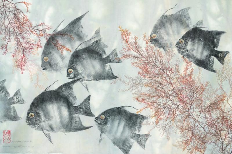 Spadefish Samba: Atlantic Spadefish