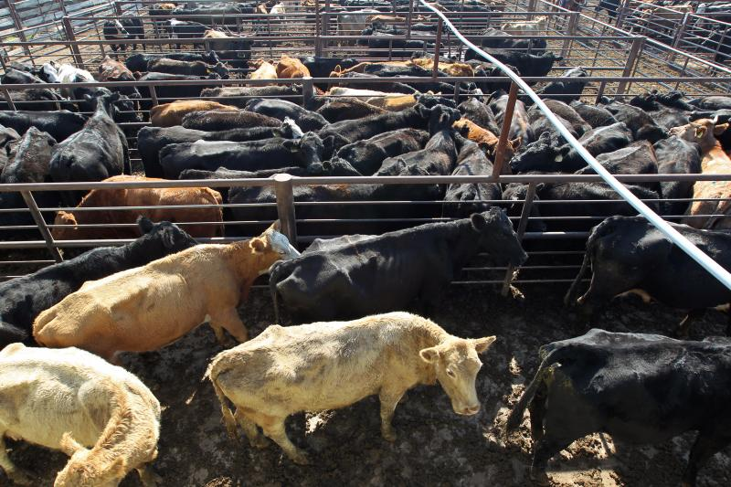 The debate about sustainable diets has focused on meat production, which requires lots of land and water to grow grain to feed livestock. It also contributes to methane emissions. But the Cabinet secretaries with final authority say the 2015 dietary guide