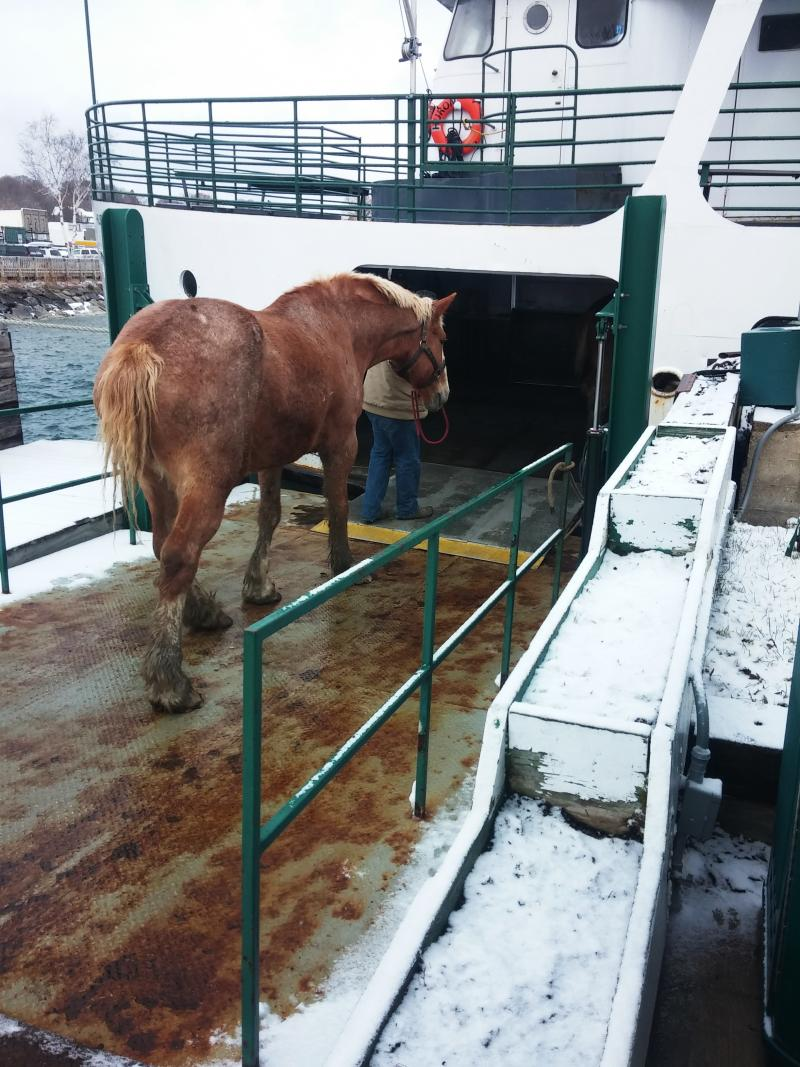 Every spring, hundreds of horses are ferried from their winter hiatus in the Upper Peninsula for a good grooming and harness fitting, before beginning their summer jobs pulling carriages.