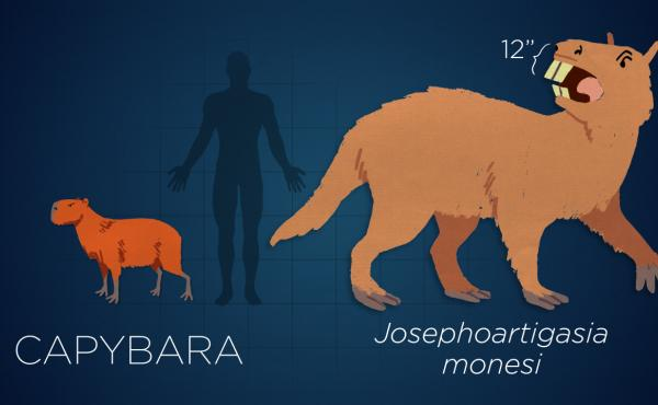 Josephoartigasia was a cow-size rodent that lived 3 million years ago.