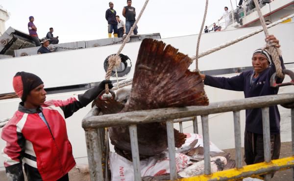 Workers in Benjina, Indonesia, load fish into a cargo ship bound for Thailand last November. Seafood caught by slaves mixes in with other fish at a number of sites in Thailand, including processing plants. U.S. customs records show that several of those T