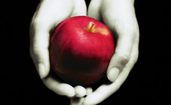 Twilight book cover.
