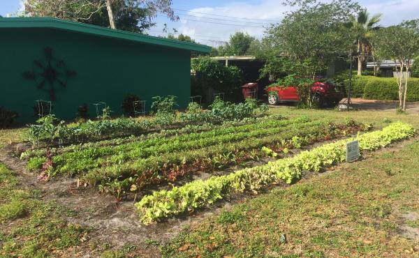 """Rows of greens grow on the front yard of Gary Henderson's house. He's one of a handful of homeowners in Orlando, Fl., who've given up their lawn to Fleet Farming. Once """"you realize that you can eat your lawn, I think it makes a whole lot of sense,"""" Hender"""