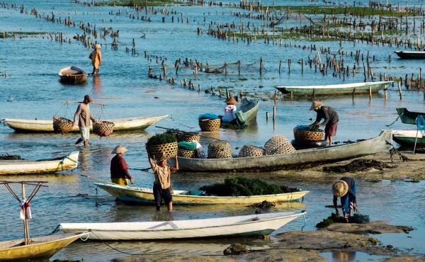Seaweed farms like this one on Nusa Lembongan Island, in Indonesia, are the main sources of carrageenan.