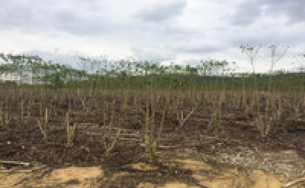 """Naygney Assu's farm in Espirito Santo state in eastern Brazil has suffered from years of droughts. """"We've had no rain since last December,"""" says Assu. """"And my well dried up. There was nothing we can do, except wait for rain."""""""