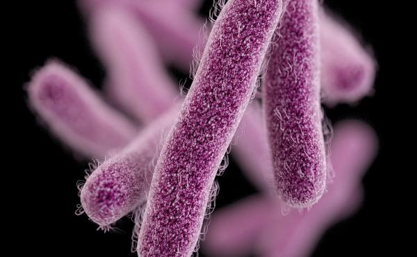 Shigella is a huge problem around the world. The bacteria infect about 100 million people each year and kill about 600,000.