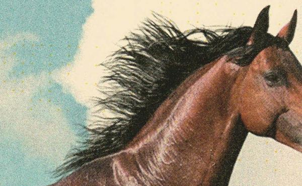 A cover detail of The Mare, by Mary Gaitskill.