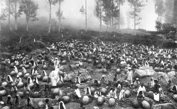 Baskets full of fresh tea leaves are sorted at a Lipton tea plantation in Ceylon circa 1900.