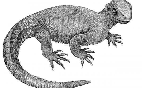 An illustration of Pappochelys, based on its 240-million-year-old fossilized remains. This ancestor to today's turtle was about 8 inches long.