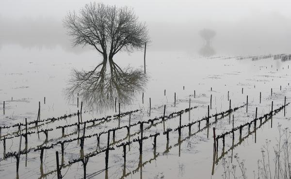 Vineyards remain flooded in the Russian River Valley in Forestville, Calif., on Monday. A massive storm system stretching from California into Nevada saw rivers overflowing their banks, flooded vineyards and forced people to evacuate their homes after war