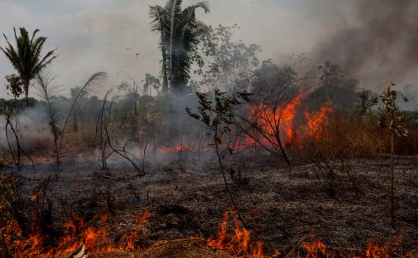 In the 1970s, the Brazilian government declared the Amazon open for settlement. Rondonia became like Oklahoma during the land rush. The poor and dispossessed of other Brazilian states were encouraged to move in. Quickly, trees gave way to farms and cattle