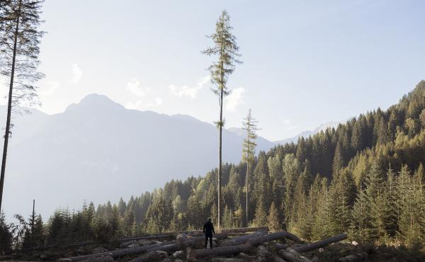 "Marcello Mazzucchi, who's known as ""The Tree Whisperer."" ""I've felled one million trees in my career,"" he says. ""But in their place, 100 million more have grown up."""