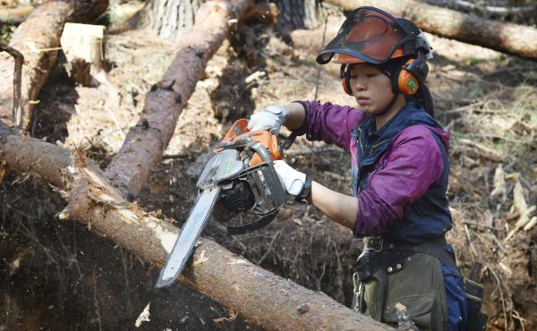 Lumberjack Yukiko Koyama cuts pine trees on a hillside overlooking Matsumoto City in Nagano prefecture on Japan's central Honshu island. Koyama's employment at a local timber mill is partially subsidized by a government program to get more Japanese women