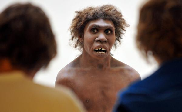 Neanderthals, represented here by a museum's reconstruction, had been living in Eurasia for 200,000 years when Homo sapiens first passed through, and the communities intermingled. The same genes that today play a role in allergies very likely fostered a q