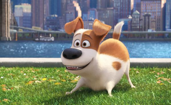 Max (Louis C.K.) in The Secret Life of Pets.