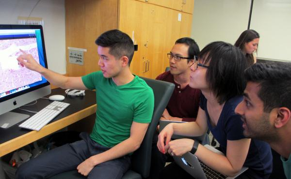 (Left to right) NYU medical students Brian Chao, Michael Lui, Hye Min Choi, and Varun Vijay take the team approach to learning about the anatomy of cells, and how disease can disrupt them. Analyzing big data sets is now a routine part of their studies, to