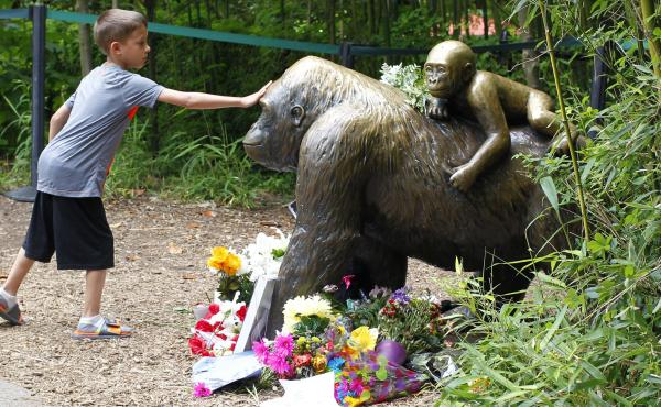 The mother of a 3-year-old boy was not negligent when he fell into part of the Cincinnati Zoo's Gorilla World exhibit, officials say. Here, a boy touches a bronze statue at the zoo that became something of a memorial in the days after the gorilla was shot