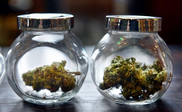 High-end marijuana buds on sale at a Denver dispensary.