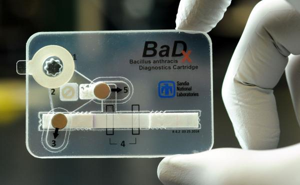 Safe and small: The credit-card-sized test for anthrax destroys the deadly bacteria after the test completes.
