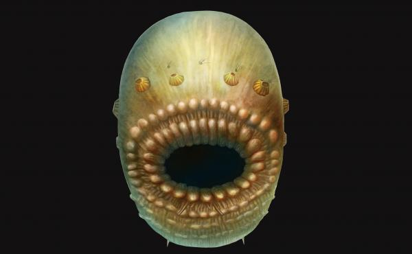 An artist's impression of Saccorhytus coronarius, a sea creature that lived 540 million years ago.