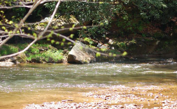 Dan River at the newly formed Hill Farm Game Land. (Credit: Piedmont Land Conservancy)