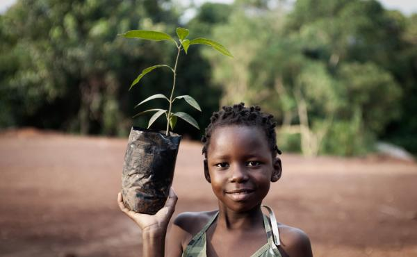 A mango seedling can — after a few years — bear economically beneficial fruit.