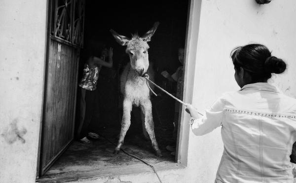 """""""Oh, look! There's a donkey in my living room!!!"""" was the photographer's Instagram caption."""