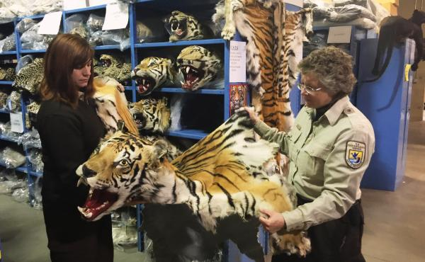 Coleen Schaefer (left) and Doni Sprague display a tiger pelt that was confiscated and is being stored at the National Wildlife Property Repository on the outskirts of Denver. Some 1.5 million items are being held at the facility. The Trans-Pacific Partner