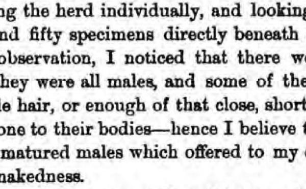 Henry Wood Elliott comments on walruses on Punuk Island in 1874, from his book Our Arctic Province.