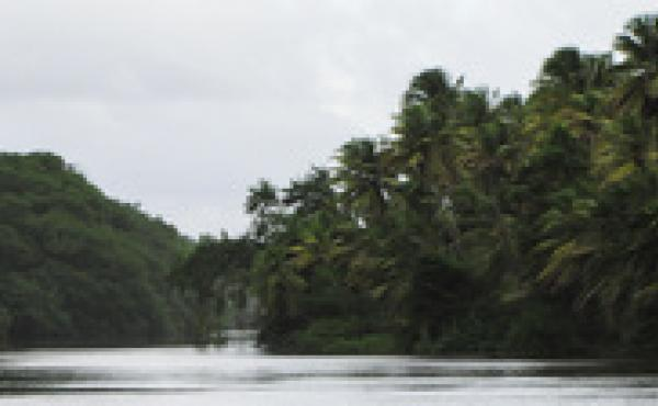 The Mayaro River in Trinidad. The Mayaro virus was first identified in forest workers on the island.