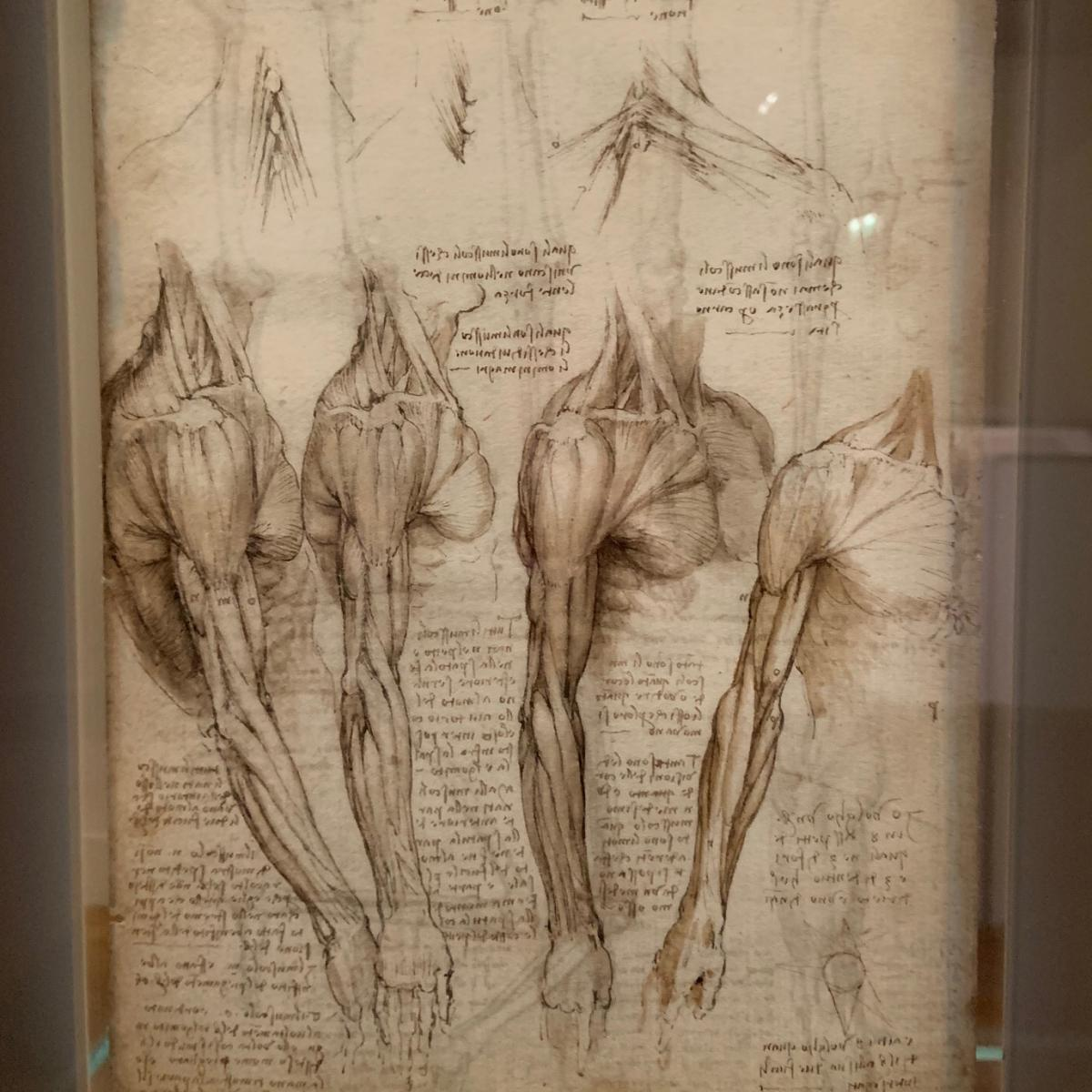 Leonardo da Vinci made numerous illustrations and sketches as part of an intensive study of human anatomy.