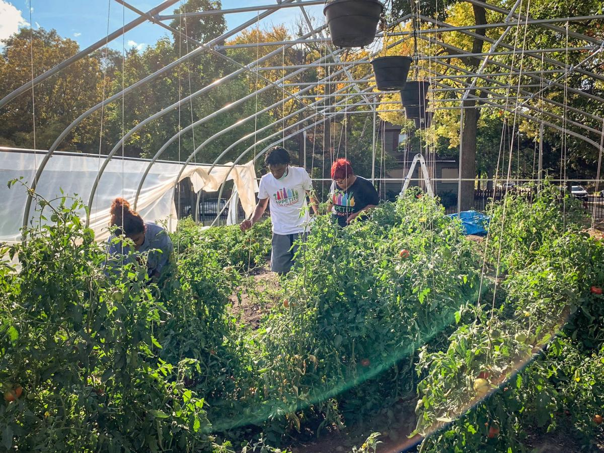 Appetite for Change teaches others to grow their own food in the absence of available healthy options in North Minneapolis. Throughout the pandemic they have also provided free produce to 300 local families.