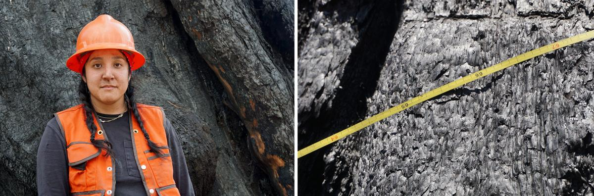 Alexis Bernal of UC Berkeley is with a team of researchers measuring the burned sequoias and trying to understand how so many died.