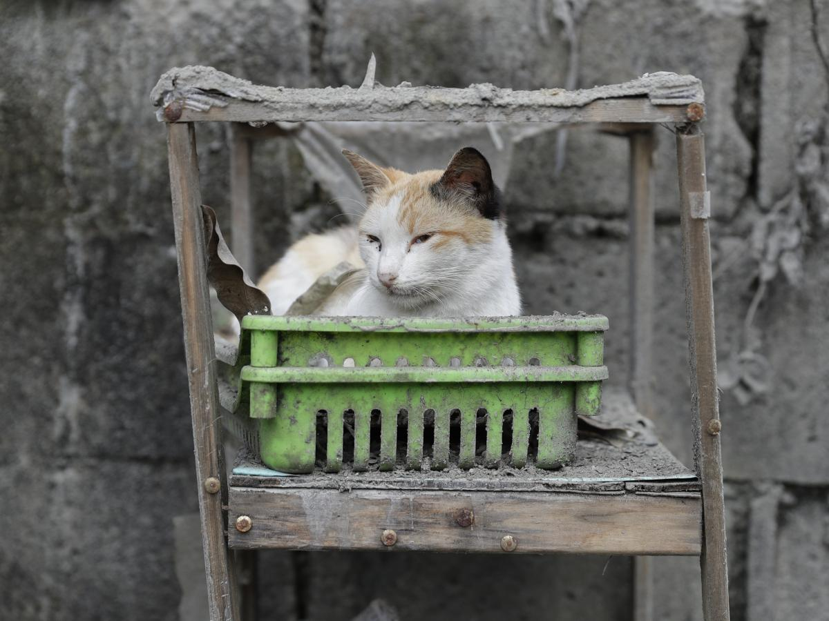 A cat rests on furniture that is covered in volcanic ash at a town near Taal Volcano in Tagaytay, Cavite province, southern Philippines, on Sunday.