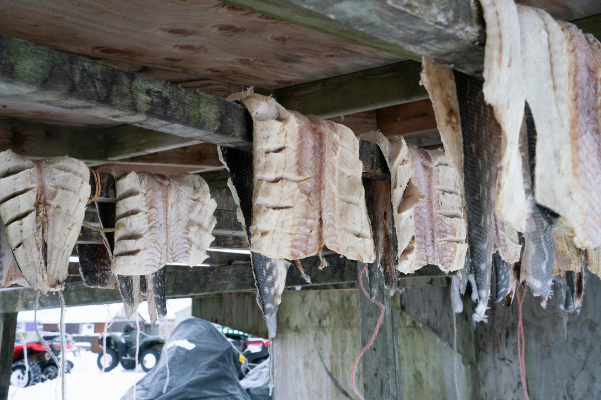 Fish dry outside a home in Toksook Bay.