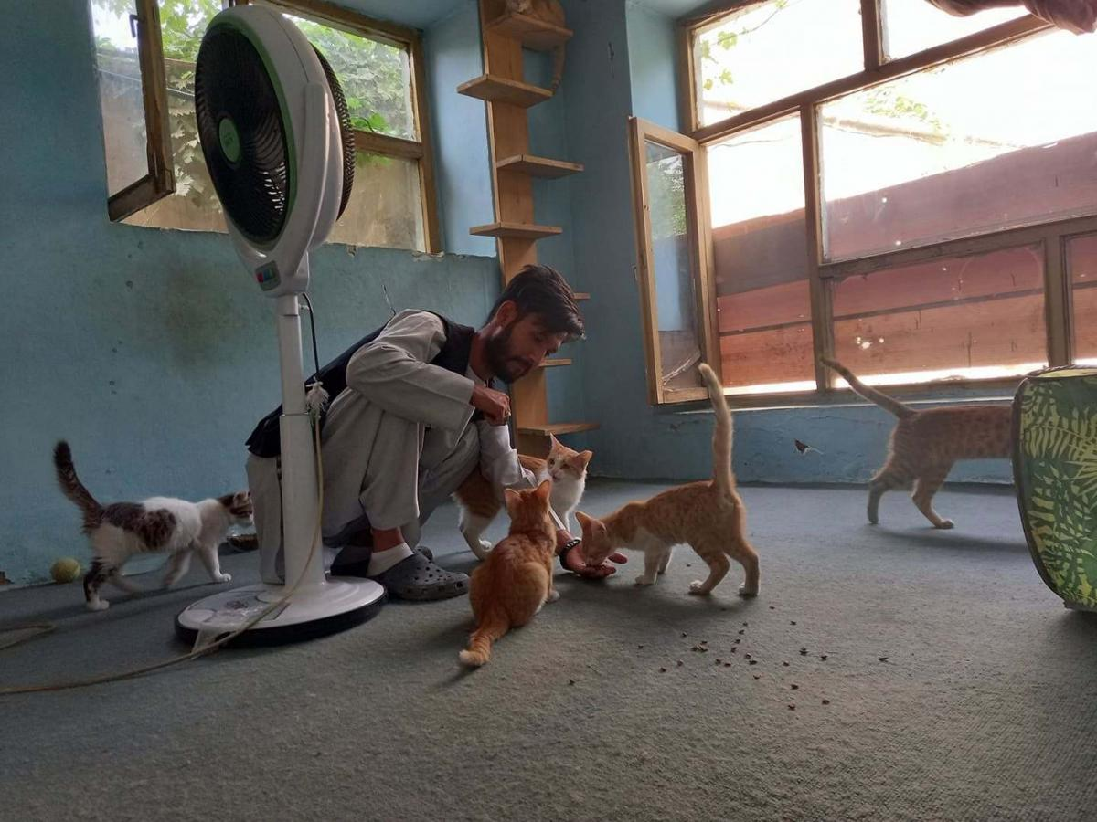 A member of the staff of the Kabul Small Animal Rescue feeds the organization's cats. Work to find and rescue dogs and cats left behind in the mass exodus of Kabul continues for the organization.