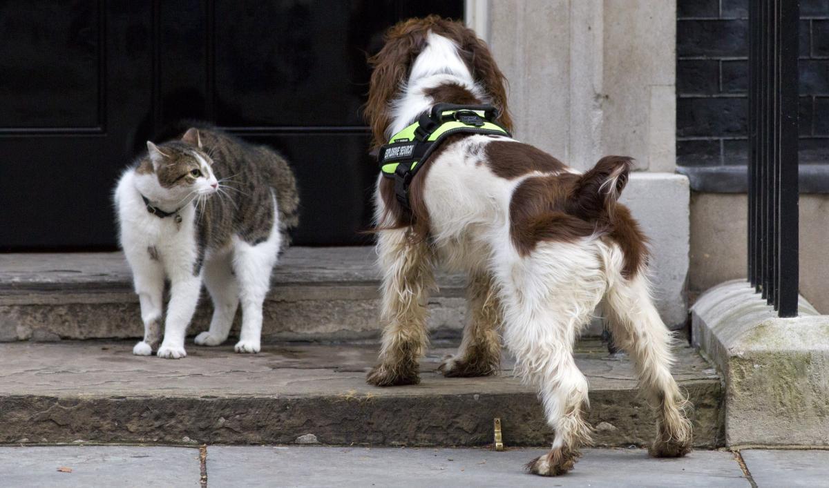 types of cat litter