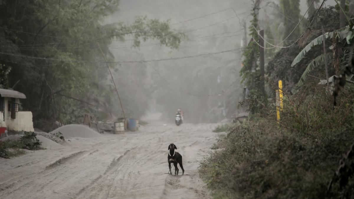 A stray dog barks on a road covered with ash from Taal Volcano in Agoncillo, Batangas City, Philippines, on Monday.